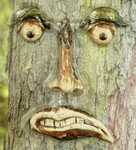 Angry Tree Face