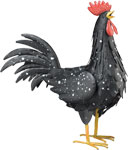 Black Rooster Decor MED
