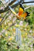 Hanging Yellow Butterfly Bouncer Chime
