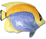 Large Yellow Back Bandit Fish Wall Art