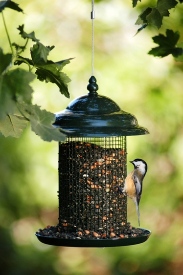 Peanut Sunflower Feeder w/Tray - Click to enlarge