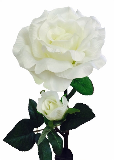 Solar Flower - White Rose - Click to enlarge
