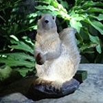 Solar Squirrel Light