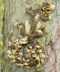 Squirrel Tree Art