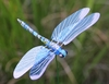 Windy Wings Dragonfly Garden Stakes (Set of 6)