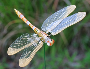Windy Wings Dragonfly Garden Stakes Set of 6 only 2399 at