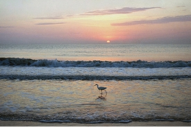 Egret at Sunrise Giclee