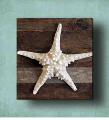 Knobby Starfish on Driftwood Panel