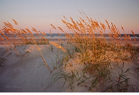 Sunset Sea Oats Giclee