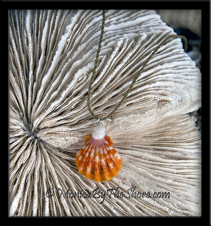 "Bright Orange Hawaiian Sunrise Shell & Puka Shells ""Country Style"" Necklace"