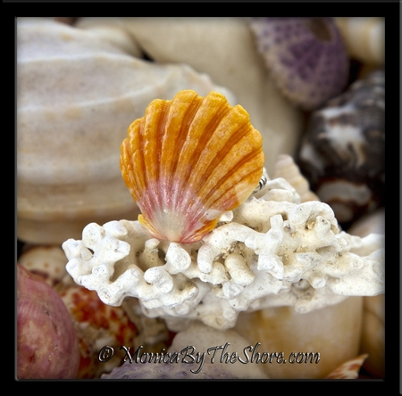 Classic Gold Pink Hawaiian Sunrise Shell Sterling Silver Ring