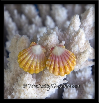 Classic Sunrise Shell Sterling Silver Post Earrings