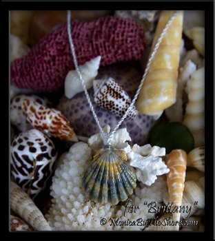 "Custom for ""Brittany"" Moonrise Sunrise Shell with Spectro Gemstone Necklace"