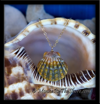 "Extra Large Rare ""Rootbeer"" Hawaiian Sunrise Shell Gold Chain Necklace"