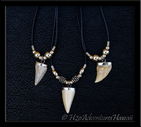 Fossilized Pygmy White Shark Tooth Necklace