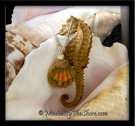 "Jumbo Rainbow ""Moonrise Shell"" Sunrise Shell & Trochus Shell Necklace"