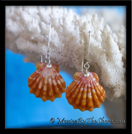 Peach and Cream Hawaiian Sunrise Shell Silver Longwire Earrings