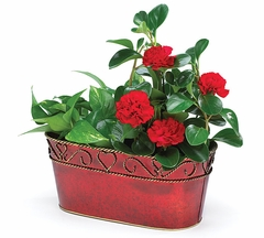 Red Flower Planter - Cachepot