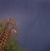 Giraffe Scenic 12 x 12 Scrapbook Paper by Sugar Tree