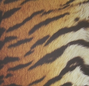 Tiger Skin 12 x 12 Scrapbook Paper by SugarTree