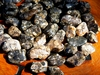 Turtella Fossilized Agate Gemstone