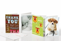 Everyday Greeting Cards - 20pc Set