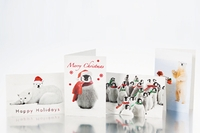 National Geographic Holiday Greeting Cards - 16pc Set