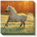 Arabian Gray Horse Canvas by C. Cummings