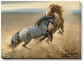 Challenged � Fighting Stallions Wrapped Canvas Art Print
