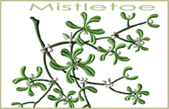 Mistletoe Mini Group