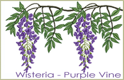 Wisteria - Purple Vine
