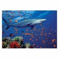 Melissa and Doug 100 Piece Shark Cardboard Jigsaw Puzzle - click to enlarge