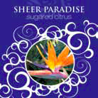 32 oz. Sheer Paradise La Tee Da Fragrance Oil | 32 oz.  La Tee Da Fragrance Lamp Oils
