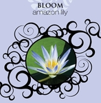 NEW! - 16oz. Bloom La Tee Da Fragrance Oil | 16 oz. La Tee Da Fragrance Lamp Oils