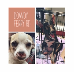 The Dogs of Dowdy Ferry Road