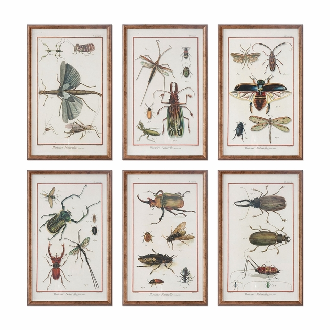 """Set Of 6, Nature Theme Insects And Bugs Print In Copper Bronze Frames, 10""""x16"""""""