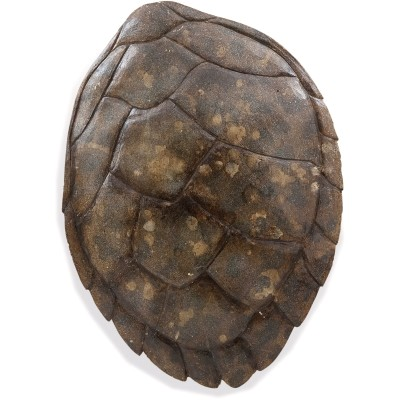 Turtle Shell II Transitional Wall Hanging Art 7500-632EC