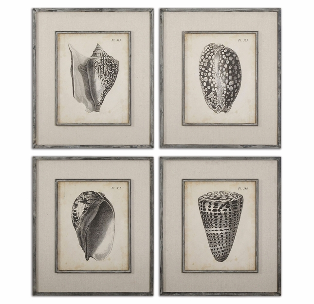 Vintage Diderot Shells Charcoal Set of 4 Art 51088