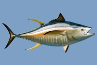 "55"" Yellowfin Tuna Half Mount Fish Replica"