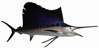 "72"" Atlantic Sailfish Half Mount Replica"