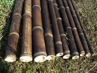 "Bamboo Pole Black 1.25""x 4' (10 Poles)"
