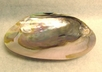 Mother of Pearl Dish Large Size