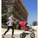 Mountain Buggy 2013 Urban Jungle Stroller - Chilli