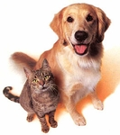 Pet Allergies including Cat Dander and Dog Dander