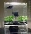 Aquarium Accessory Lighting