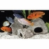 Underwater Galleries Ornament Cichlid Stone Square Small