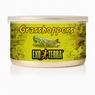 Exo-Terra Male Grasshoppers, 1.2 oz.