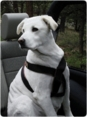 Ruff Rider Roadie Elite - Pet Safety Harness