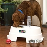 Healthy Pet Diner Elevated Dog Bowl set in 2 sizes