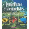 Damselfishes and Anemonefishes - Reef Fishes